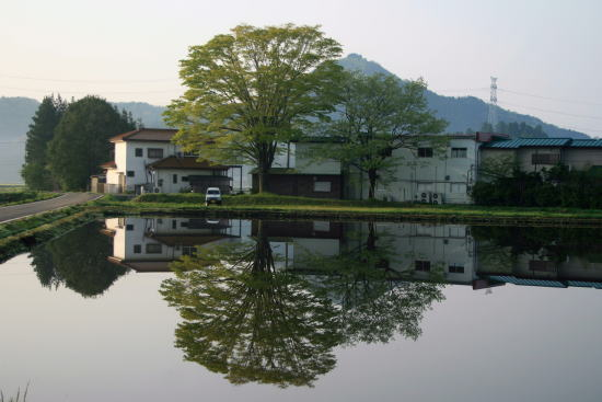 20,4,30 塩野室のケヤキの鏡像b.jpg