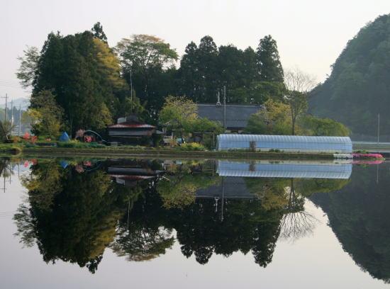 20,4,30 塩野室の屋敷林の鏡像2b.jpg