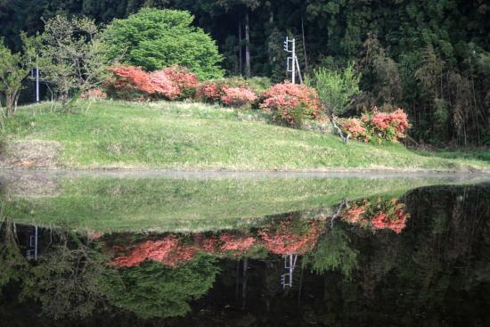 20,5,2 川室の田んぼのヤマツツジの鏡像1b.jpg