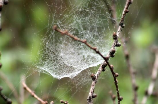 20,5,30 八方がらめのクモの巣4b.jpg