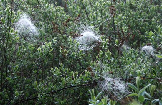 20,6,1 八方がらめのクモの巣10b.jpg