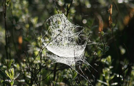 20,6,1 八方がらめのクモの巣18b.jpg