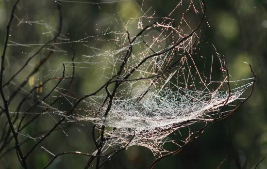 20,6,1 八方がらめのクモの巣19b.jpg