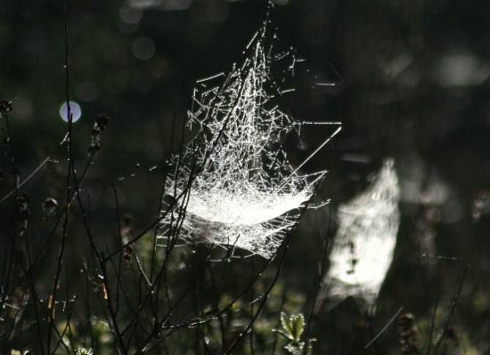 20,6,1 八方がらめのクモの巣23b.jpg