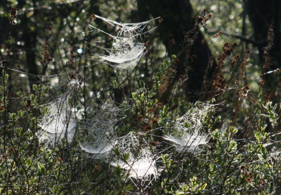 20,6,1 八方がらめのクモの巣24b.jpg