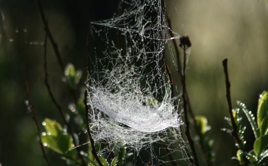 20,6,1 八方がらめのクモの巣26b.jpg