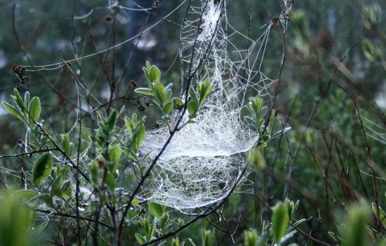 20,6,1 八方がらめのクモの巣4b.jpg