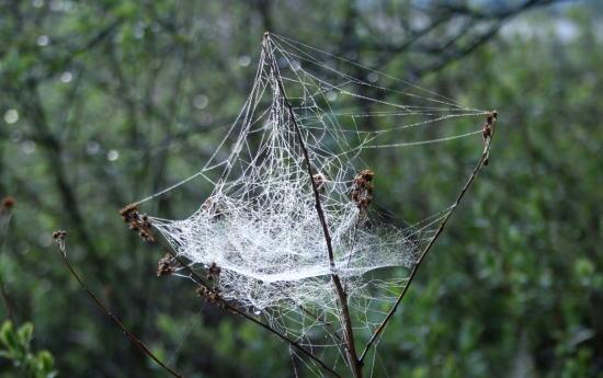 20,6,1 八方がらめのクモの巣6b.jpg