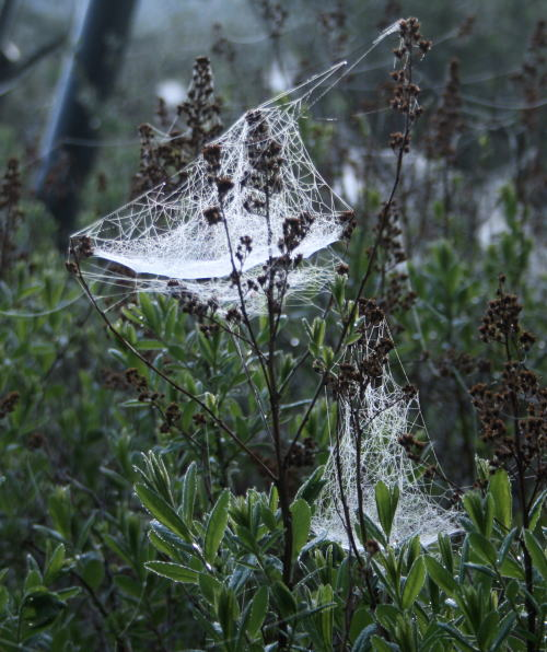 20,6,1 八方がらめのクモの巣9b.jpg