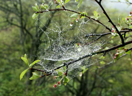 20,6,4 八方がらめクモの巣2b.jpg