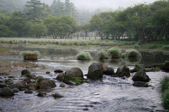 20,7,5 光徳沼のヤチボウズ1b.jpg