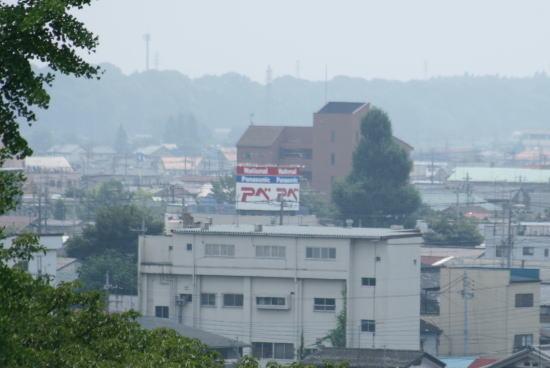 20,8,3 十二社神社のイチョウノキ1b.jpg