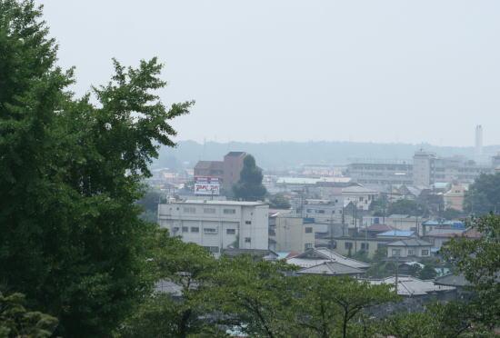 20,8,3 十二社神社のイチョウノキ3b.jpg