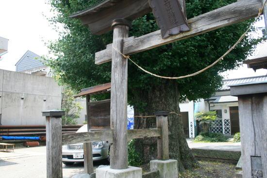 20,8,3 十二社神社のイチョウノキ7b.jpg