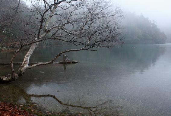 21,11,14 湯の湖の憂愁1-5b.jpg