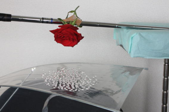 21,7,28 雫の中のバラ2-1b.jpg