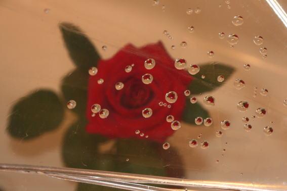 21,7,4 ビニール傘とバラ1-1.b.jpg