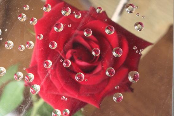 21,7,5 バラと水滴1-2b.jpg