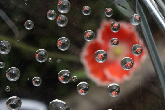 21,7,5 ポピー(橙)と水滴1-7b.jpg