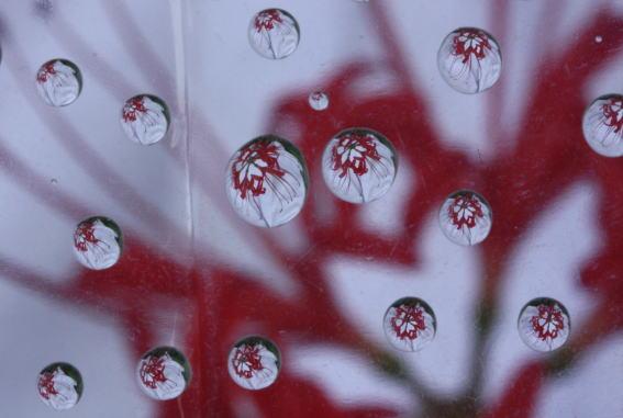 21,9,17ソバの花とヒガンバナ2-2b.jpg