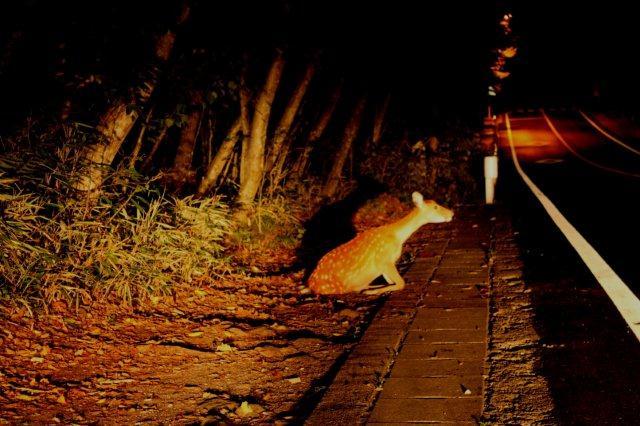 22,9,6 poor deer1-1.jpg