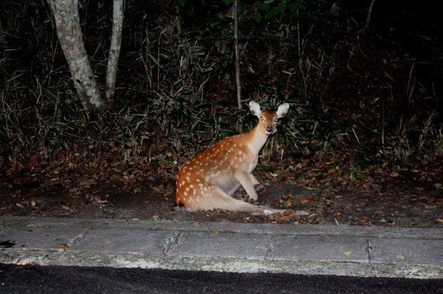 22,9,6 poor deer1-5.jpg