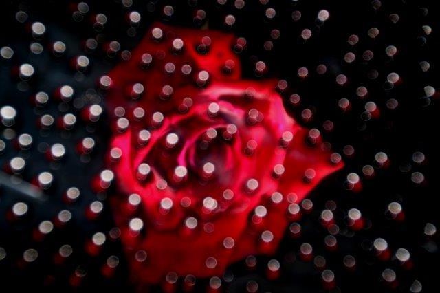 25,7,10 滴のバラ2-3.jpg