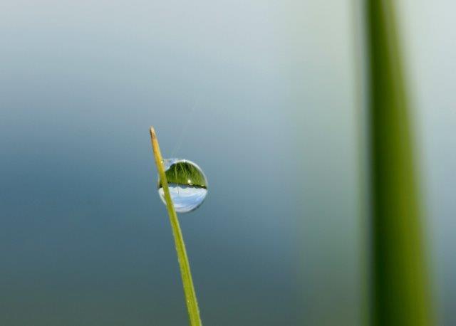 25,7,16 稲の滴と連山1-9.jpg