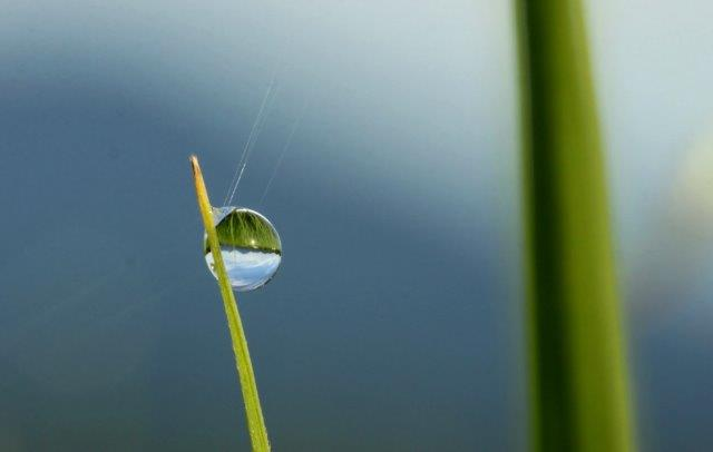 25,7,16 稲の滴と連山2-3'.jpg