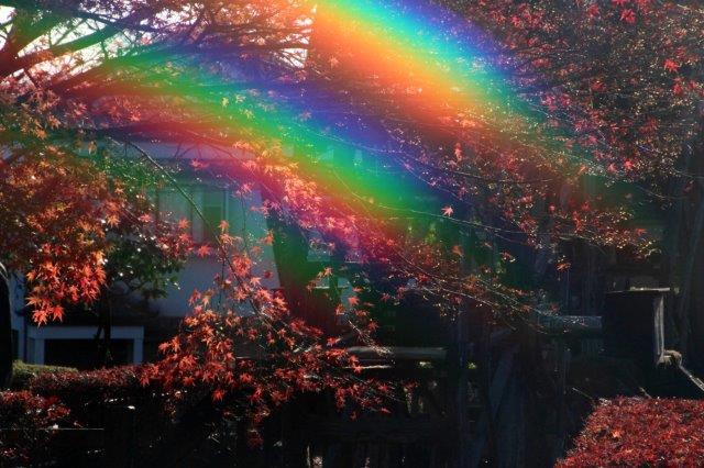 26,11,16 杉並木公園の紅葉1-5 逆虹.jpg