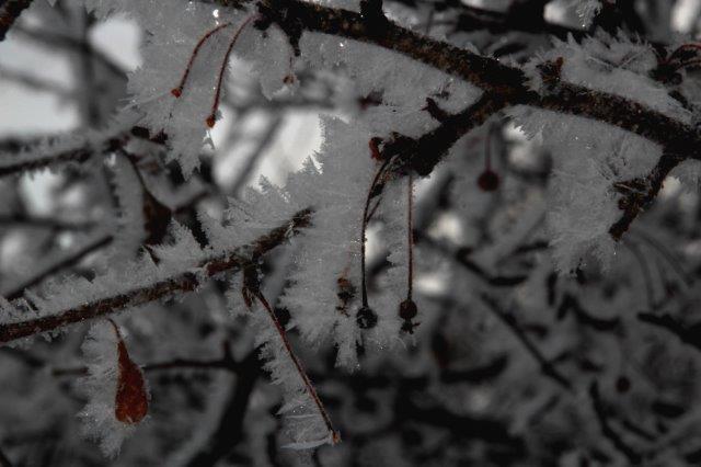 26,12,20 光徳沼の霧氷1-4.jpg