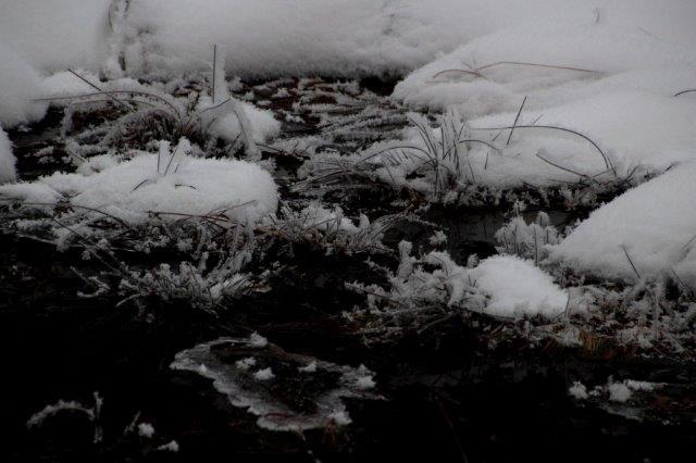 26,12,20 光徳沼の霧氷1-9.jpg