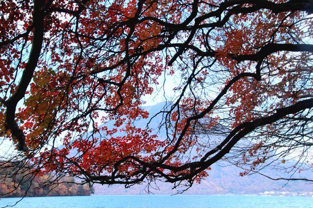 28,10 30 中禅寺湖南岸の紅葉2-8b.jpg