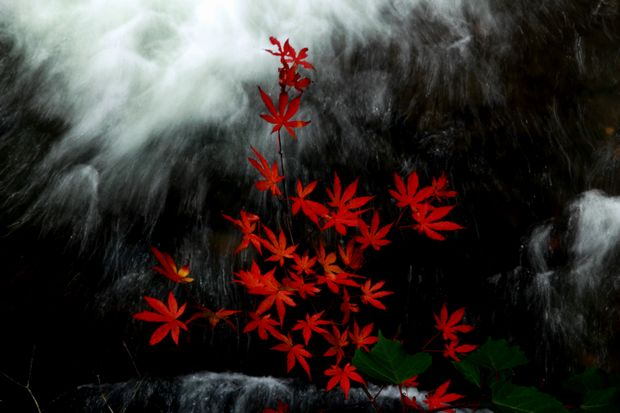 28,10,10 竜頭の滝の紅葉1-4b.jpg