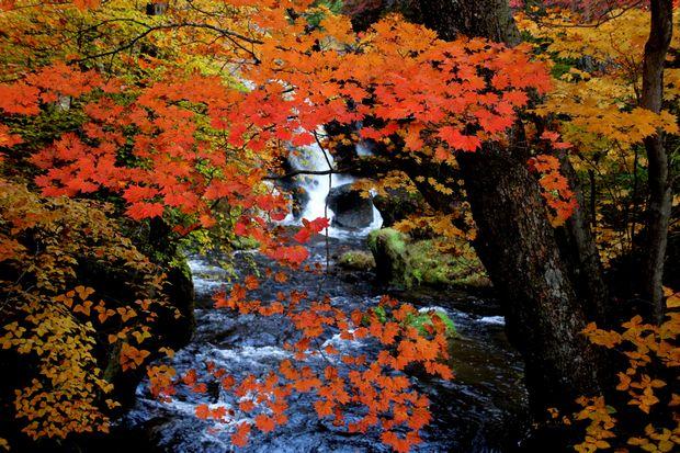 28,10,23竜頭の滝の紅葉1-1b.jpg