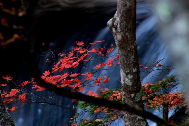 28,10,23竜頭の滝の紅葉3-5b.jpg