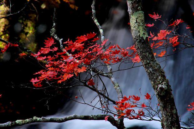 28,10,23竜頭の滝の紅葉3-7b.jpg