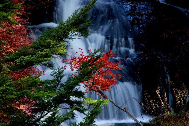 28,10,23竜頭の滝の紅葉3-8b.jpg
