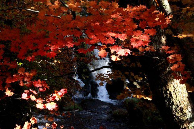 28,10,23竜頭の滝の紅葉4-5b.jpg