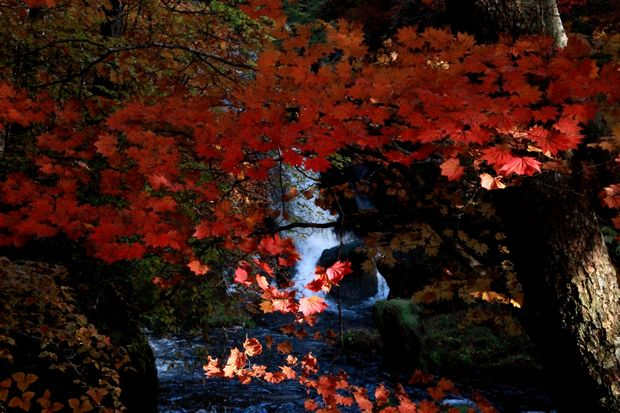 28,10,23竜頭の滝の紅葉4-9b.jpg
