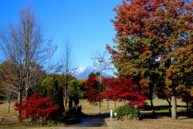 28,11,12 冠雪連山と巷の紅葉4-2b.jpg
