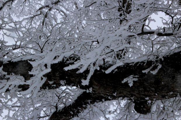 28,3,12 華厳のハルニレの霧氷1-5b.jpg