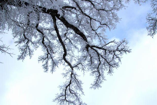 28,3,12 華厳のハルニレの霧氷2-7b.jpg