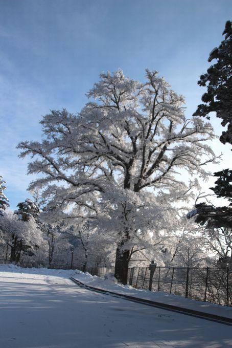 28,3,13 ハルニレの霧氷2b.jpg