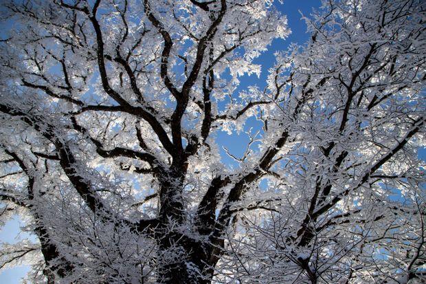 28,3,13華厳ハルニレの霧氷1-9b.jpg