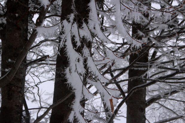 28,3,13華厳近辺の霧氷2-5b.jpg