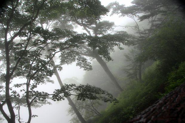 28,7,23 霧の華厳1-1b.jpg