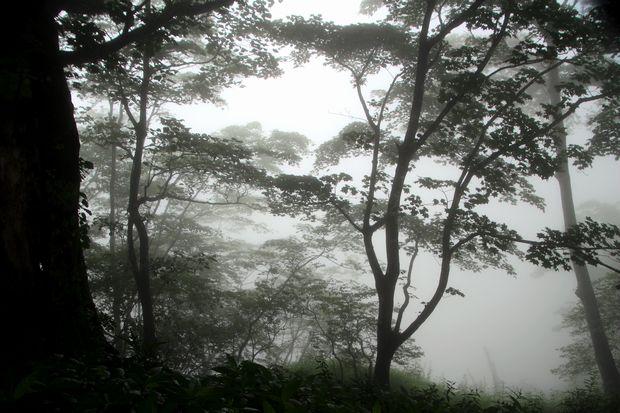28,7,23 霧の華厳1-2b.jpg