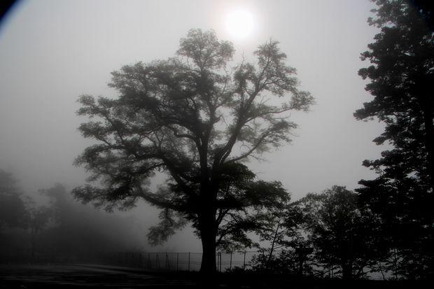 28,7,23 霧の華厳2-5b.jpg