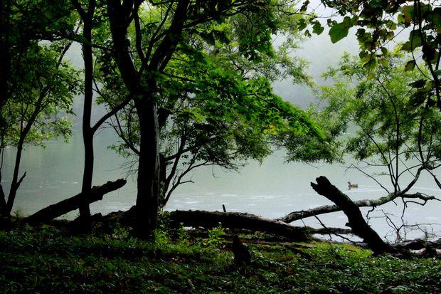 28,9,22 雨の湯の湖1-9b.jpg